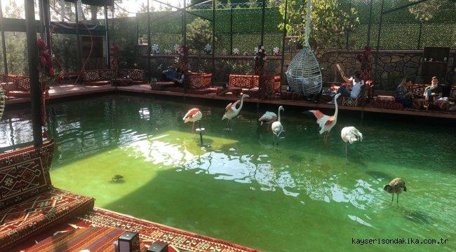Doğa koruma ekipleri, Tuzla'da 6 flamingo ve 1 vervet maymununa el koydu