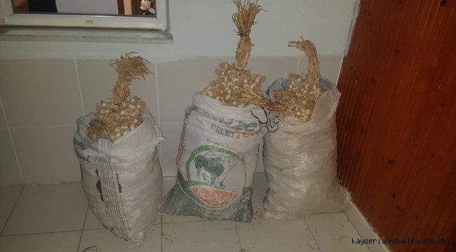 Kastamonu'da sarımsak hırsızlığı
