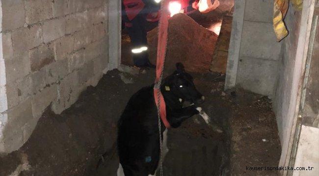Kırklareli'nde çukura düşen inek itfaiye ekiplerince kurtarıldı