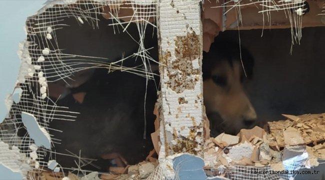 Kocaeli'de apartman boşluğuna düşen köpek kurtarıldı