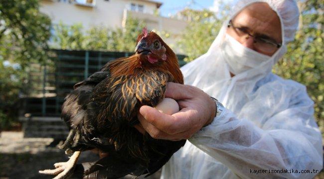 Kocaeli'de yüzde 50 hibeli tavuk desteği çiftçilerin yüzünü güldürdü