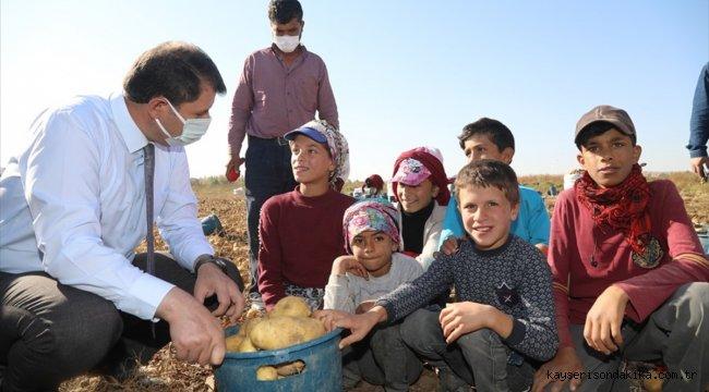 Sivas Valisi Ayhan'dan tarlada çalışan çocuklara eğitim müjdesi