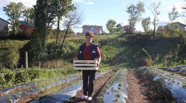 TİKA'dan Bosna Hersek'te çilek yetiştiriciliğine destek