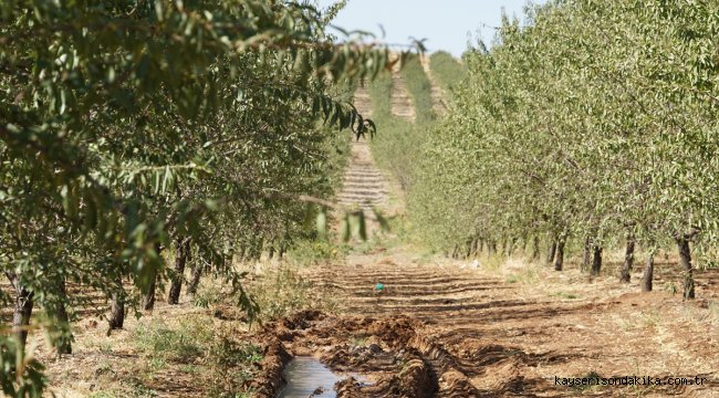 Topraktan geliştirilen böcek ilacı badem üretimine umut oldu