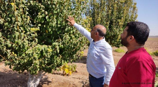 Türkiye'nin Tel Abyad ve Rasulayn'a tarım ve hayvancılık desteği sürüyor