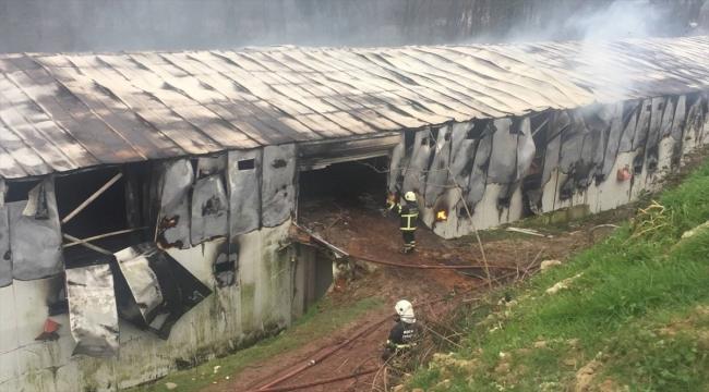 GÜNCELLEME - Kocaeli'de tavuk çiftliğindeki yangın hasara neden oldu