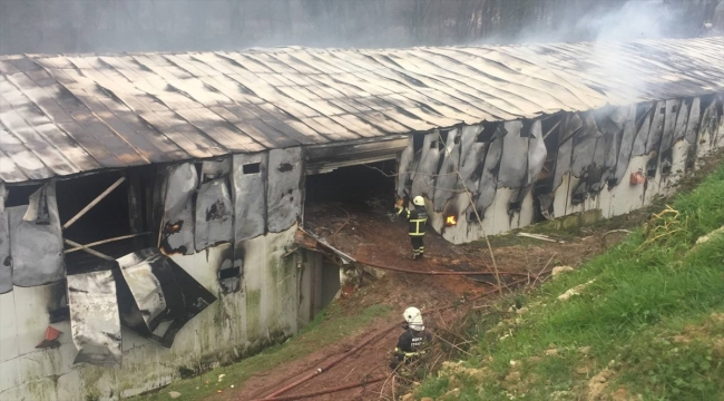 Kocaeli'de tavuk çiftliğindeki yangın söndürülmeye çalışılıyor