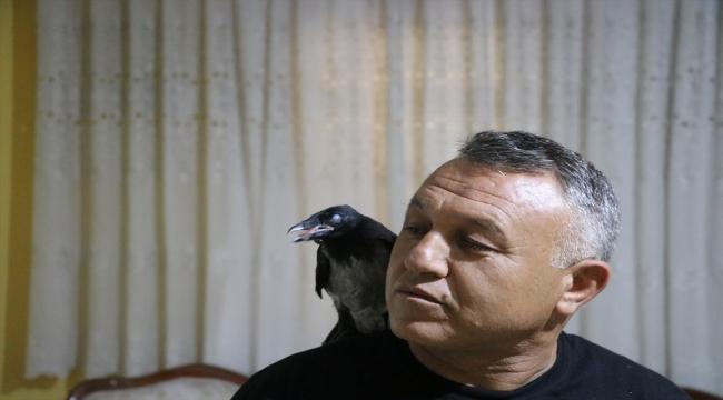 Denizlili sağlık memuru Mehmet Çolak sokakta yaralı bulduğu kargayı evinde tedavi etti