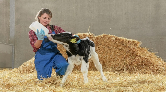 Trouw Nutrition, buzağı mamalarıyla verimli inek ve boğalarının yetiştirilmesine katkı sağlıyor