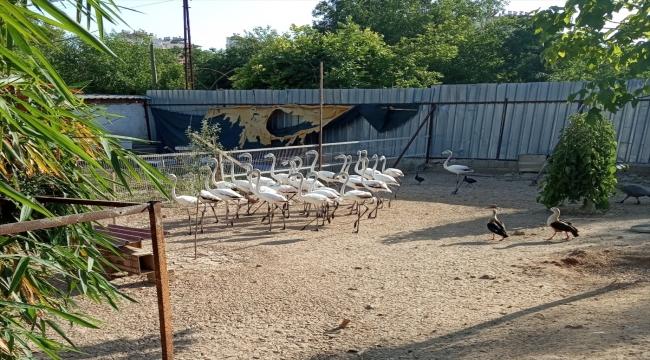 Antalya'da kanatları kesilmiş 32 yavru flamingoyla ilgili şüphelilere para cezası uygulandı