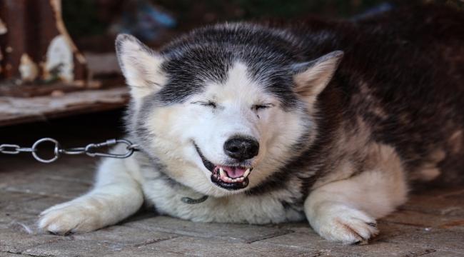 Hayvan barınaklarındaki cins köpek sayısı her geçen gün artıyor