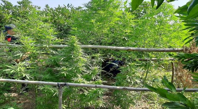 Kahramanmaraş'ta uyuşturucu operasyonlarında yakalanan 7 şüpheliden 1'i tutuklandı