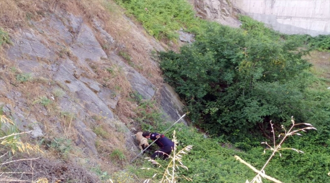 Kocaeli'de itfaiye ekipleri dikenlerin arasında mahsur kalan köpeği kurtardı