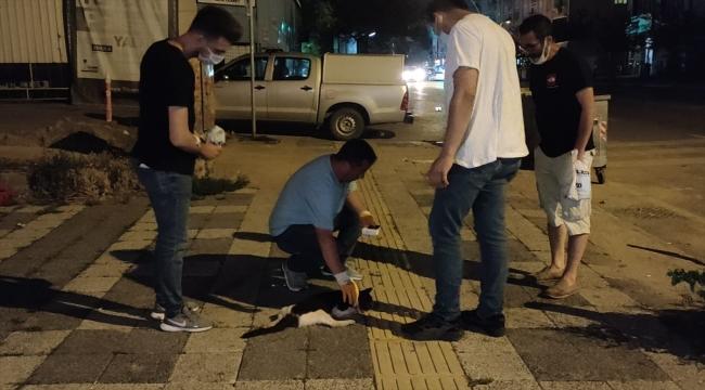 Kocaeli'de otomobilin çarptığı kediye hayvansever gençten şefkat eli