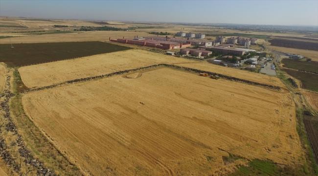 Şanlıurfa'da hükümlüler tarımsal üretim yaparak meslek öğreniyor