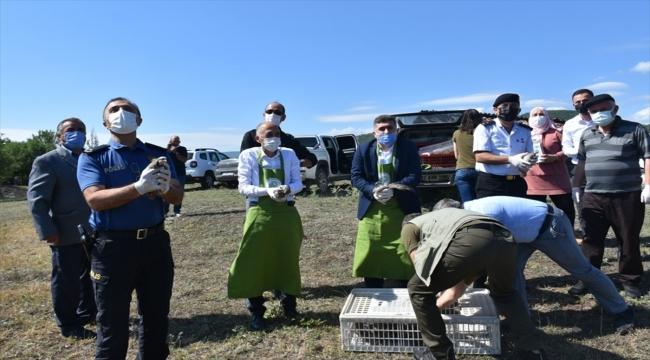 Sinop'ta popülasyonunun artırılması için doğaya 250 keklik salındı