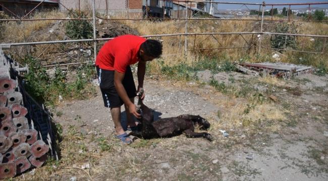 Sivas'ta bir köpek av tüfeğiyle öldürülmüş bulundu